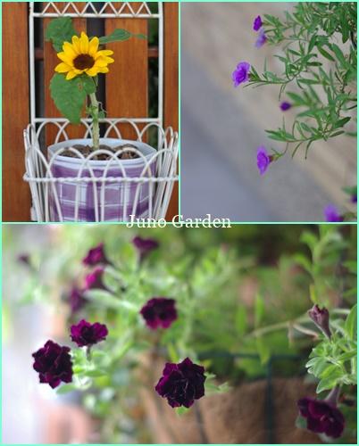 玄関先の花200818