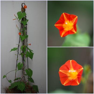 オレンジ200905