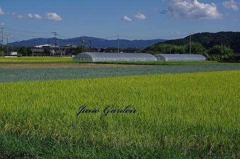 田園風景200919