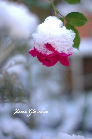 初雪201217