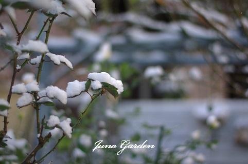 ガーデン雪201217