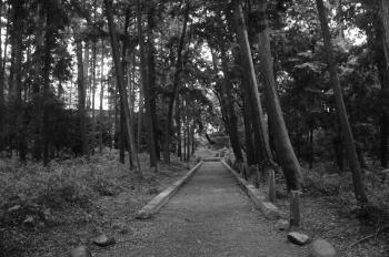 賀茂神社03
