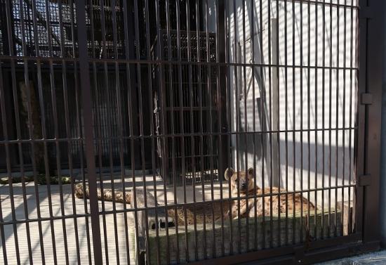 宇都宮動物園 ブチハイエナ