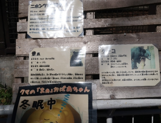宇都宮動物園 ニホンツキノワグマ