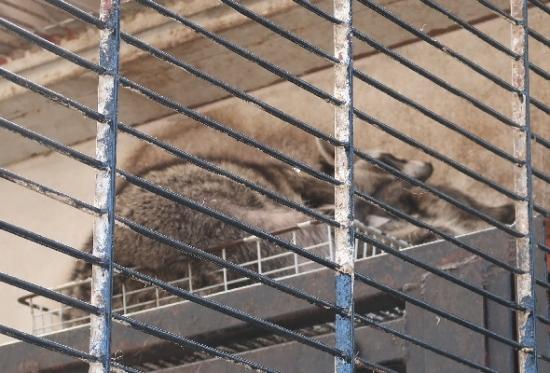 宇都宮動物園 アライグマ