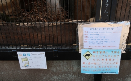 宇都宮動物園 ホンドタヌキ