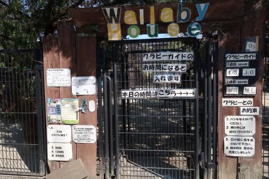宇都宮動物園 ベネットアカクビワラビー