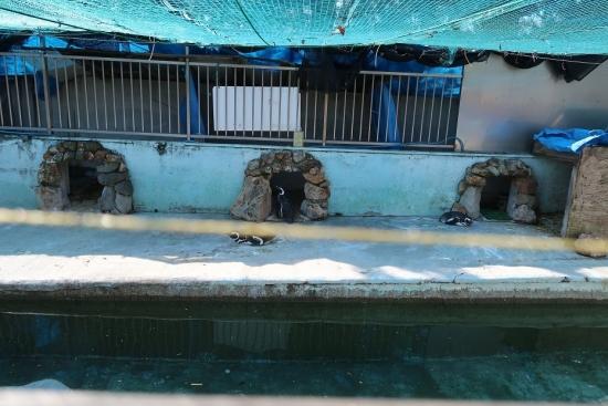 宇都宮動物園 マゼランペンギン