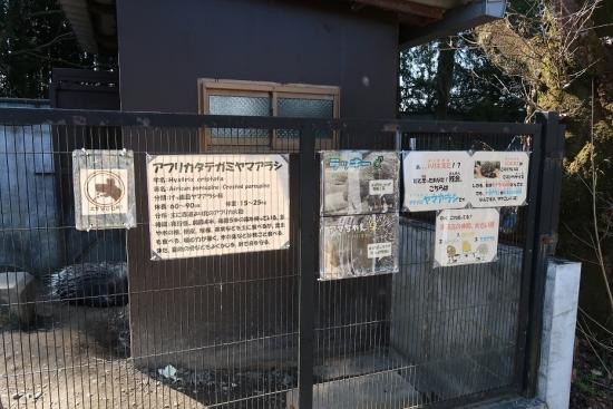 宇都宮動物園 アメリカタテガミヤマアラシ