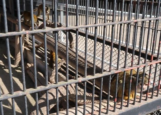 宇都宮動物園 リスザル