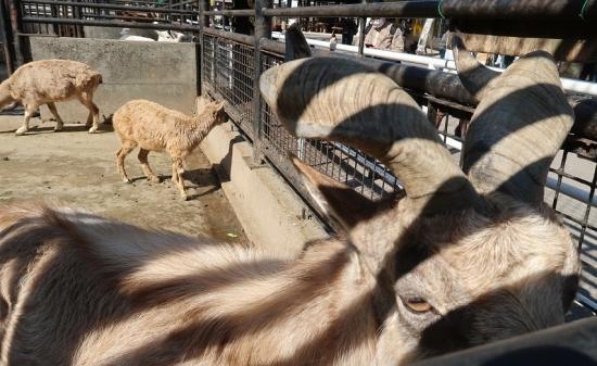宇都宮動物園 マーコール