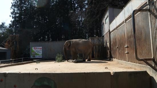 宇都宮動物園 インドゾウ