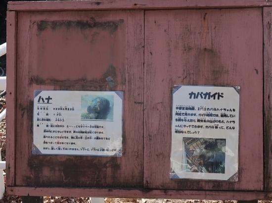 宇都宮動物園 カバ