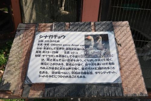 宇都宮動物園 シナガチョウ