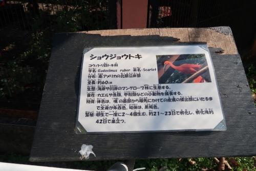 宇都宮動物園 ショウジョウトキ