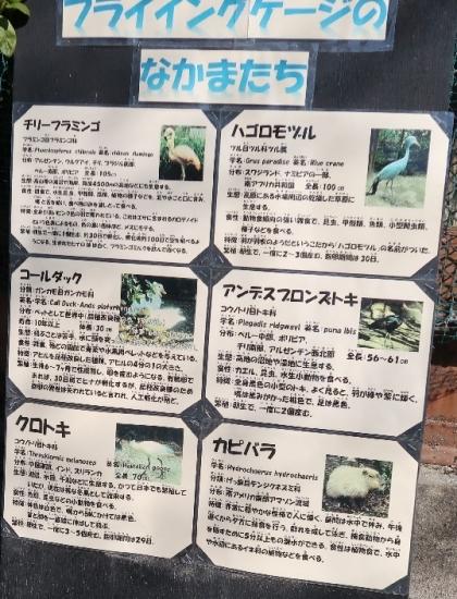 宇都宮動物園 フライングゲージの仲間たち
