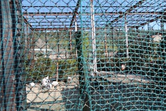 宇都宮動物園 フライングゲージ