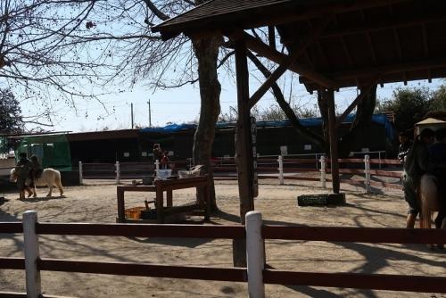宇都宮動物園 馬乗り場