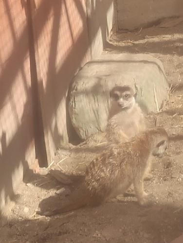 宇都宮動物園 ミーアキャット