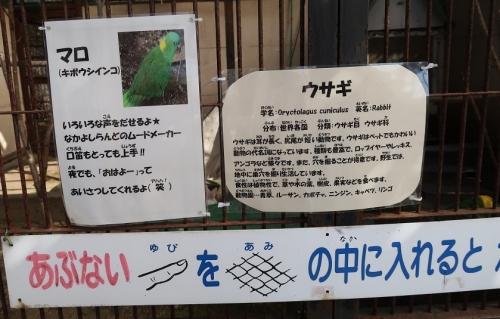 宇都宮動物園 マロとウサギ