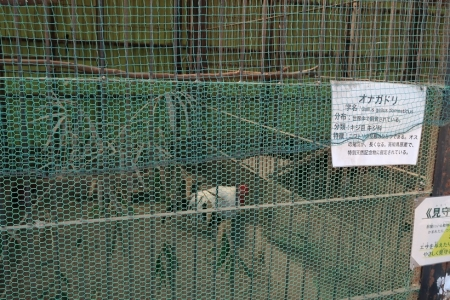 宇都宮動物園 オナガドリ