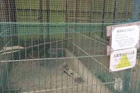 宇都宮動物園 サツマドリ