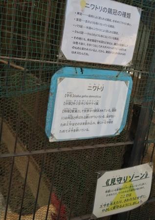 宇都宮動物園 ニワトリ