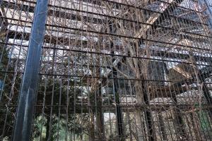 宇都宮動物園 ホンドフクロウのケージ