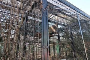 宇都宮動物園 オオワシのケージ