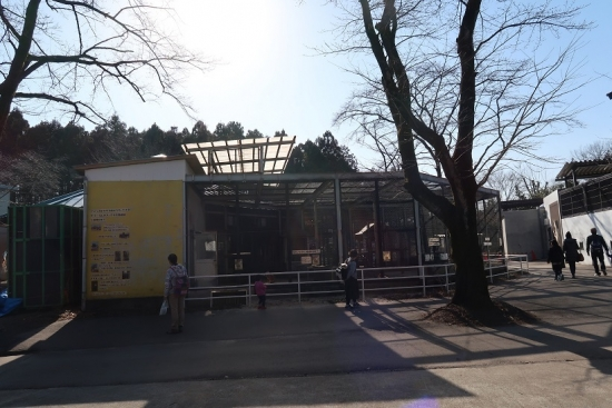 宇都宮動物園 アミメキリン