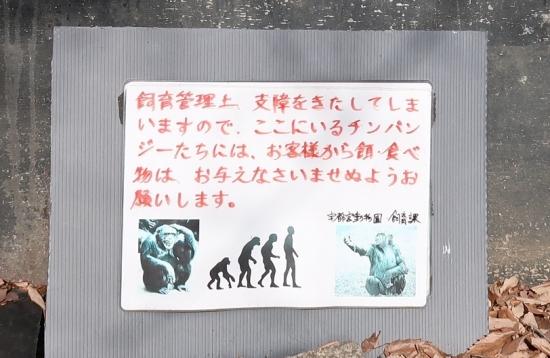 宇都宮動物園 チンパンジー
