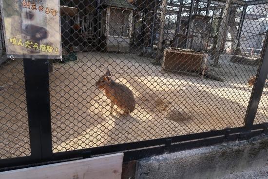 宇都宮動物園 マーラ