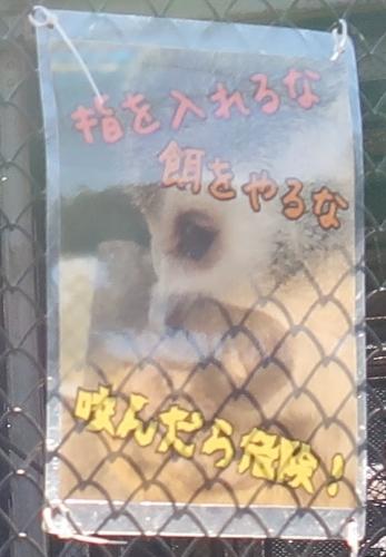 宇都宮動物園 ボリビアリスザル