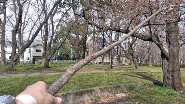 桜開花素振り (3)