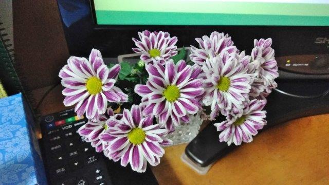 秋の花々 (1)