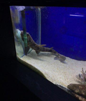 ネコザメ端 写真3