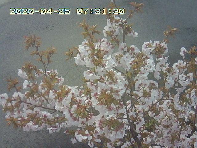 Snapshot_2020_4_25_7_31_29.jpg