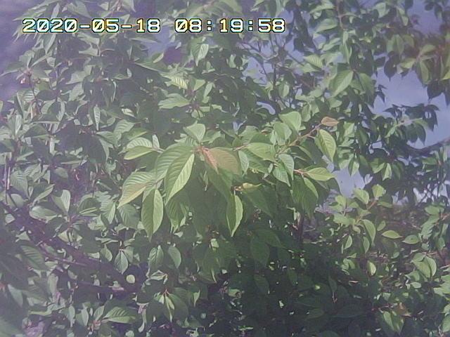 Snapshot_2020_5_18_8_19_55.jpg