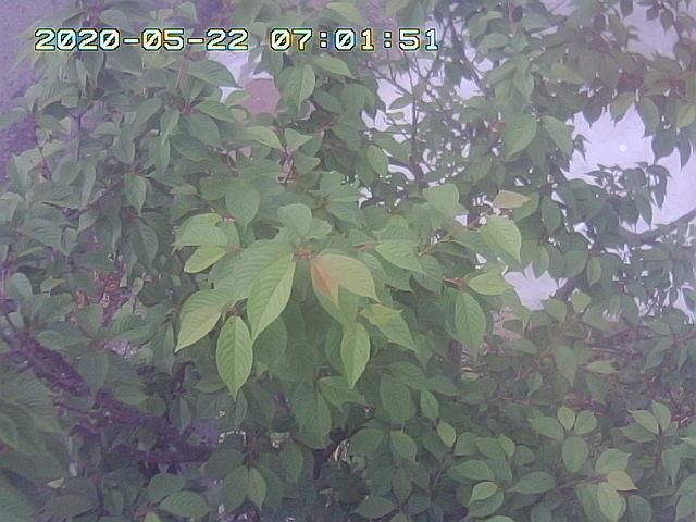 Snapshot_2020_5_22_7_1_52.jpg