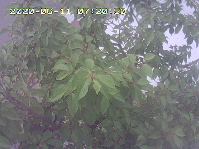 Snapshot_2020_6_11_7_20_50.jpg