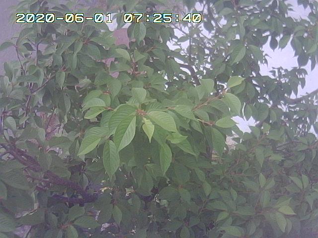 Snapshot_2020_6_1_7_25_35.jpg