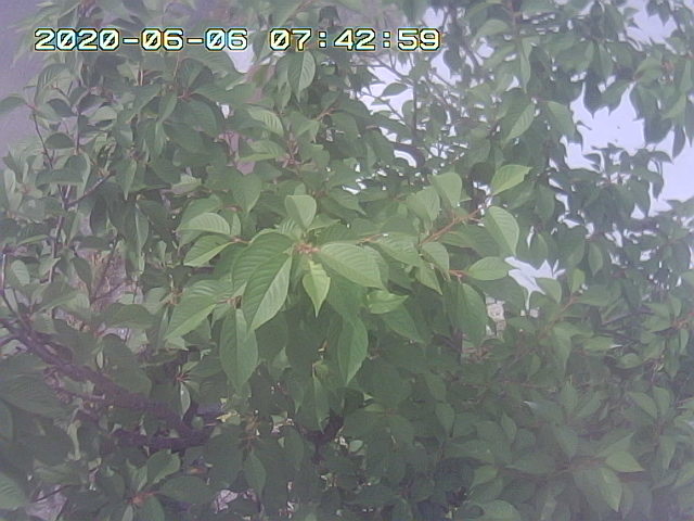 Snapshot_2020_6_6_7_42_57.jpg