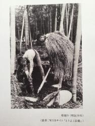たけのこ狩りの様子 工事現場 武蔵小山散策1