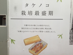 タケノコ説明 工事現場 武蔵小山散策1