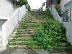 草茫々の階段 池田山 五反田駅界隈散策2