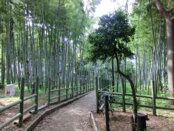すずめのお宿緑地公園 碑文谷・柿の木坂散策1