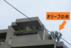 伊勢谷友介 自宅マンション4階 オリーブの木 碑文谷・柿の木坂散策