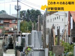 天龍寺墓地 新宿の渋谷川上流記事1