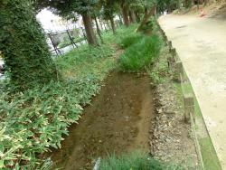 玉川上水復元水路 新宿の渋谷川上流記事1