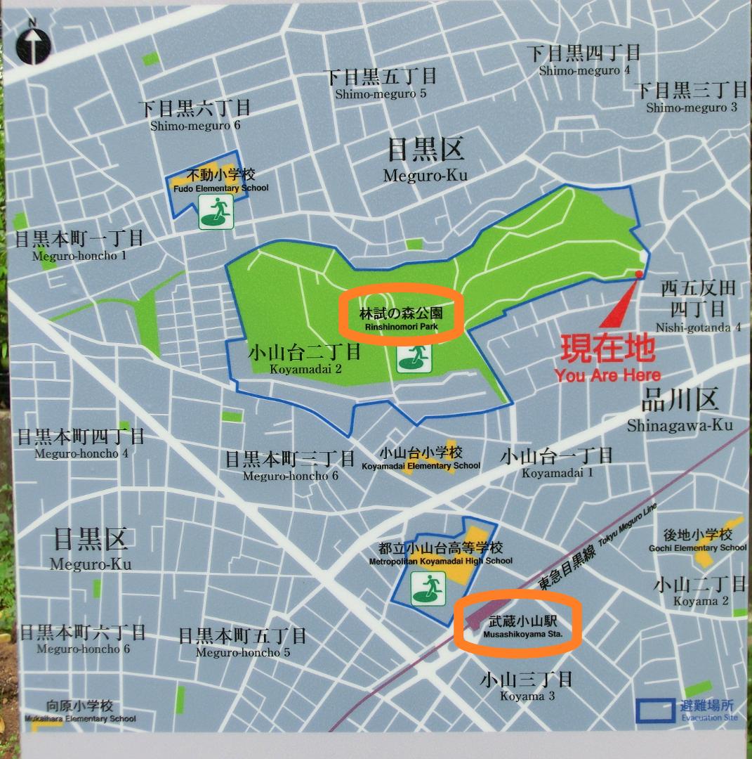 林試の森公園 地図 下目黒散策1